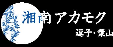 湘南アカモク 逗子・葉山